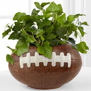 Football Fields Ivy Plant  http://www.flowersfromalfiesattic.com/product/football-fields-ivy-plant/display