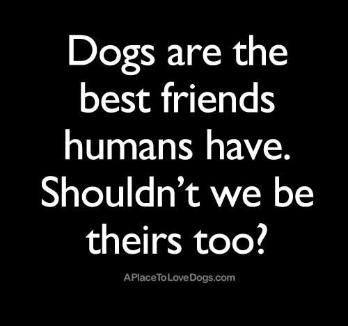 Treat your dog well or I will find you and hurt you.