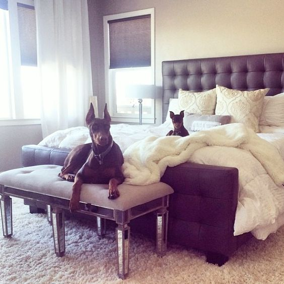 """#ZGalleriePets: Kobe & Kaia make relaxation look regal! Photo: @natasha_rpaulo  Features our West Street Bed, Andora Pillows, and Chinchilla Throw."""