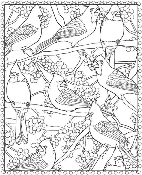 Cardinals page from Creative Haven WinterScapes Coloring Book