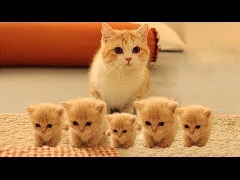 Here Are 75 Adorable Kittens That Are Bound To Melt Your Heart The