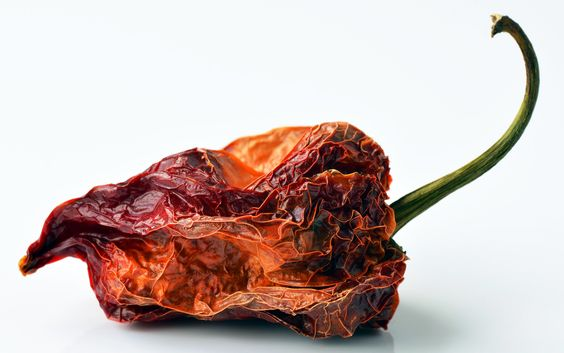 Hot stuff: Pepperheads love the hit of a habanero the kick of a bhut jolokia. But whats the allure of a fruit designed to repel? [Found]