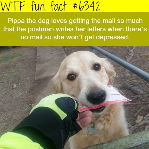 Pippa the dog - WTF fun facts