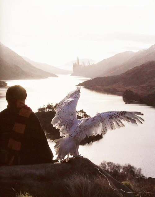 Harry and Hedwig overlooking the lake. what a beautiful shot. it makes me so sad to think this was the begining, when everything was beautiful and hogwarts was home. by the end everything was so distroyed and broken. it took so much to rebuild it again