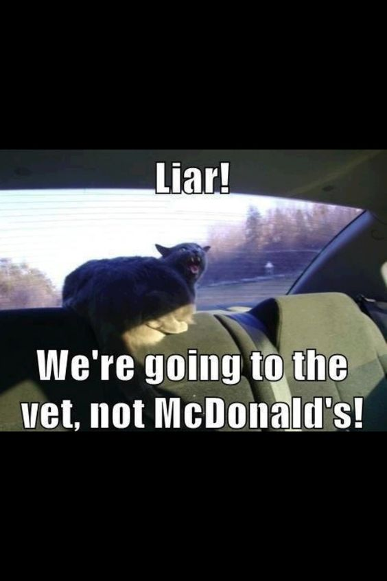 Kitty..hehehe!  told her we where going to see you and get some Mcnuggets...