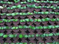 Resultados de la búsqueda de imágenes: PLANTA DE CLEPIA - Yahoo Search