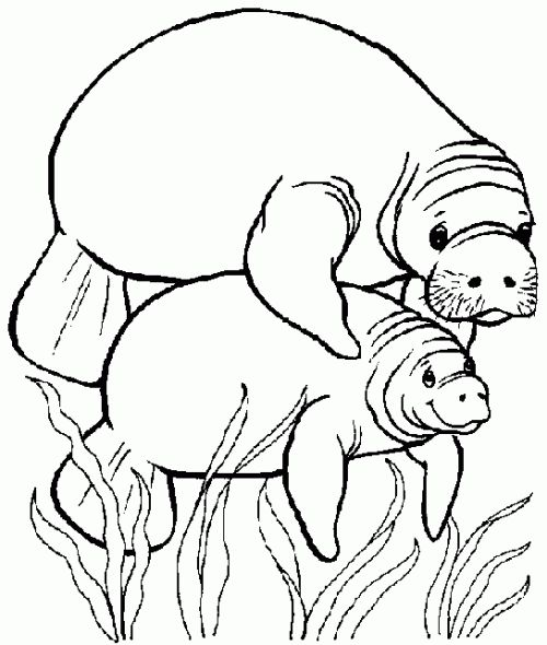 Manatee Coloring Pages Coloring Book Pages Coloring Pages
