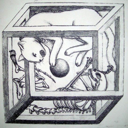 Schrodinger Cat Tattoo schrodinger's cat ..... big bang theory ...