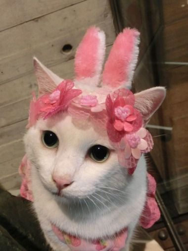 Kawaii Japanese Cosplay Cat