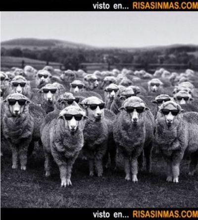 Sin miedo, se tu misma. Muéstrate tal y como eres. ¿Has visto la imagen del artículo? Un rebaño de ovejas dóciles y sin iniciativa… es lo …