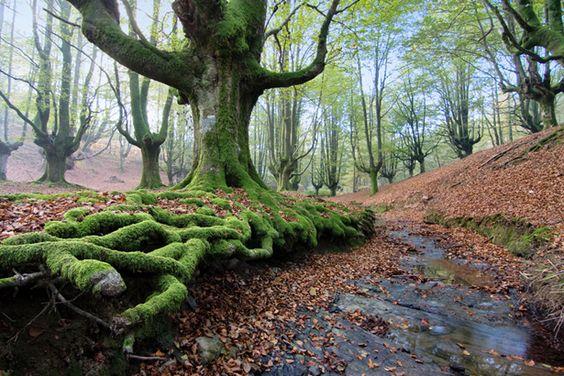 Localización: Parque Natural de Gorbeia, País Vasco, España. Google Maps: