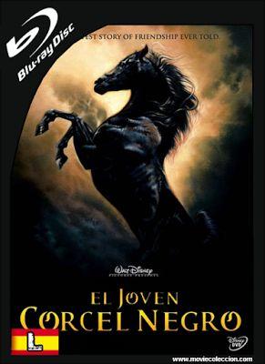 El Joven Corcel Negro 2003 BRrip Latino ~ Movie Coleccion