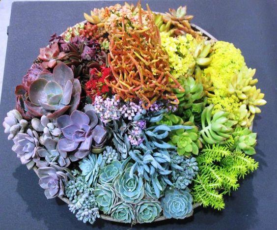 Color wheel succulent dish garden succulents cactus for Succulent dish garden designs