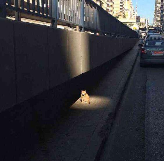 ネコさんからの重大発表...笑