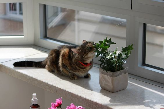 She Keeps Eating All My Plants Except That One. Somehow Im Still Not At Ease. - http://cutecatshq.com/cats/she-keeps-eating-all-my-plants-except-that-one-somehow-im-still-not-at-ease/