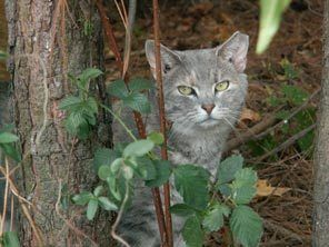 Push to get feral cats sterilized