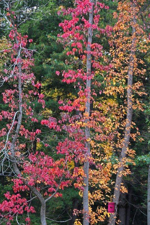 Ignite My Heart #photography #card #print #canvas #nature #autumn #Fall #foliage #tree #leaves