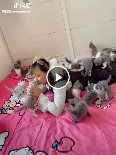 Olha quantos gatinhos fofos ela tem