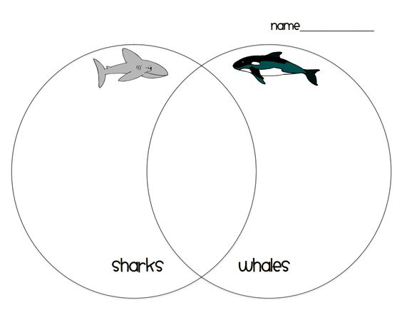 shark whale venn diagram pdf