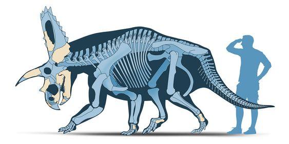 Coahuilaceratops magnacuerna.