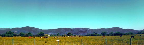 Camino  a Pelluhue, Provincia de Cauquenes, VII Región del Maule, Chile