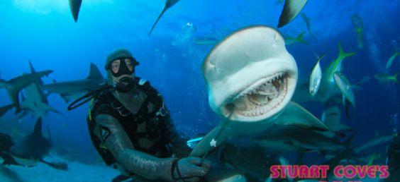 Para Conhecer: Mergulho com Tubarões - Bahamas. - Programa Território Animal