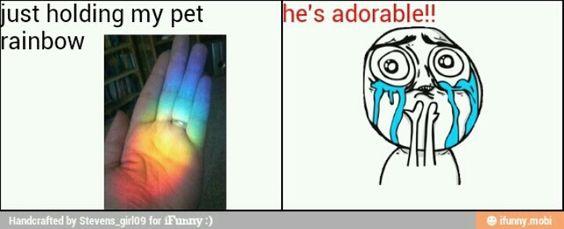 Pet rainbow