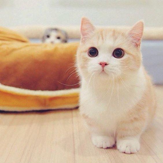 fotos de gatinhos fofos