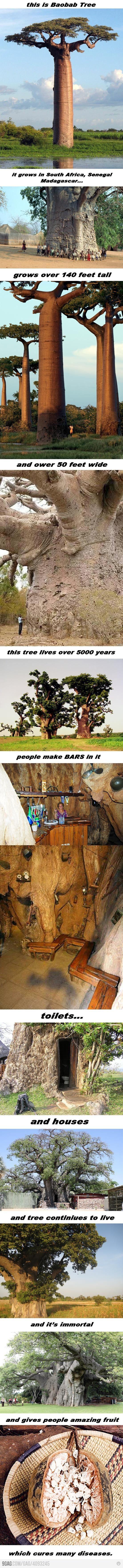 #baoba
