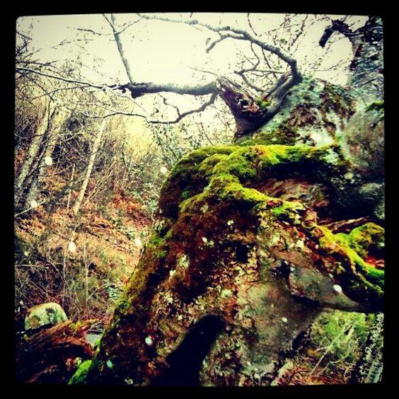 Hayedo en Sierra Cebollera #soria #entrerrobles #naturaleza #viajes #spain