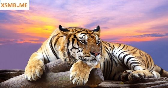 Giấc mơ thấy con hổ