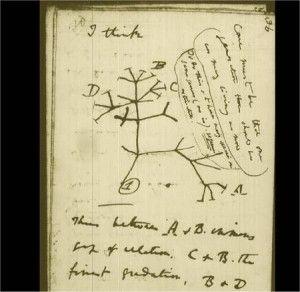 http://lewebpedagogique.com/arnaud/category/cours-de-troisieme/c-evolution-des-etres-vivants-et-histoire-de-la-terre/c2-parente-et-evolution/