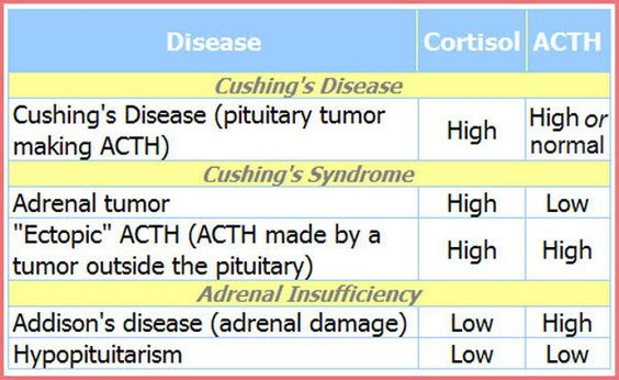 How To Test A Dog For Cushing S Disease