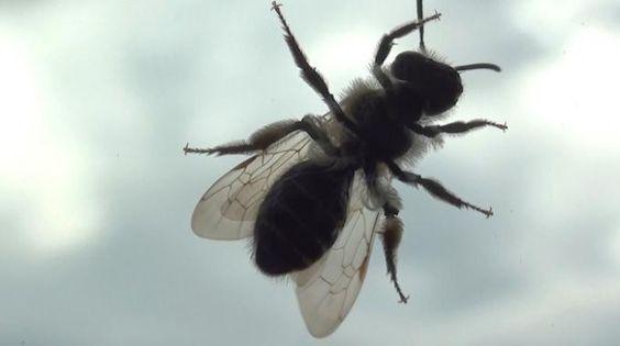 Avec la chaleur arrivent les mouches. Et les mouches, c'est insupportable. Surtout quand elles se posent sur la peau et qu'elles tournent au-dessus de la tête toute la journée. Pour éloigner