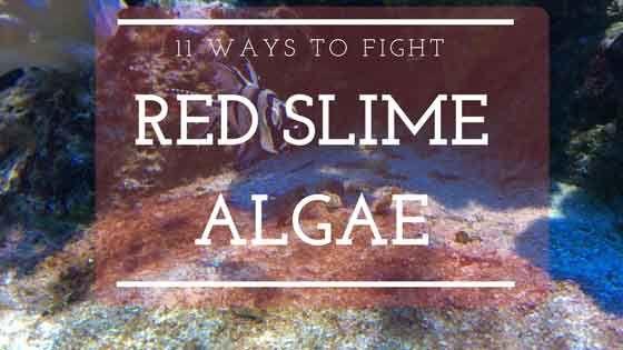 10 Ways To Fight Red Slime Algae Cyanobacteria Red Slime Aquarium Algae Saltwater Fish Tanks