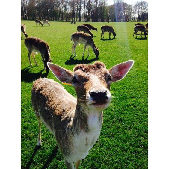 To bonito? 🌷🍀☀️🌀😍 #ireland #dublin #phoenixpark #sunny #saturday