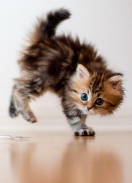 Adorable Playful Little Kittens