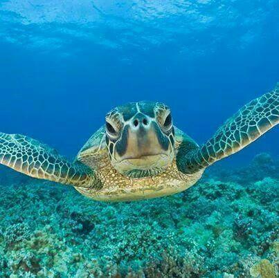 Sea Turtle ♡