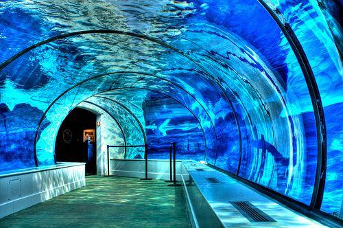 Polar Bear and Seal Underwater Tunnel, Detroit Zoo, Michigan