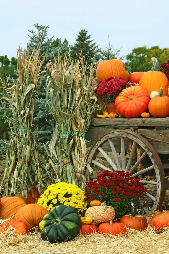 Vintage & Today: The course of today's harvest festival. -> Przebie...