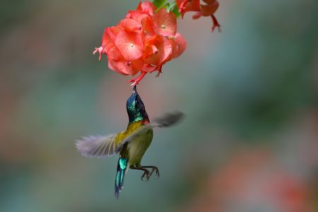 Floating sunbird Photo by Bingkang Zhou -- National Geographic Your Shot