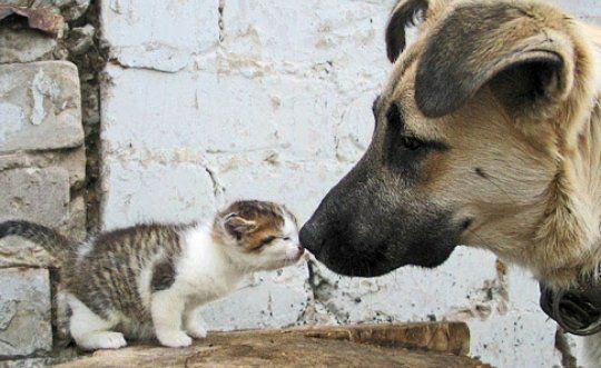 Smell me!  https://t.co/VjN2iMuSsl #Furbuddies #DogLover #DogLover #Dogs #Dog