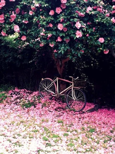 Pink flowers,  pink bike