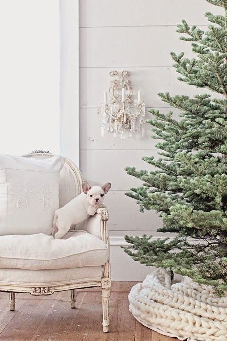 White French Bulldog on vintage chair in farmhouse room decorated for Christmas with crystal sconce