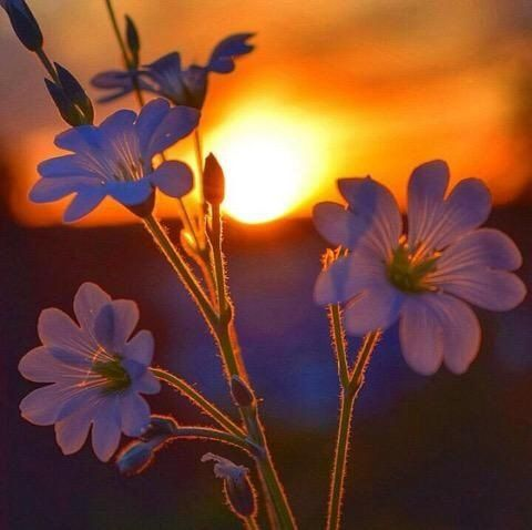 Ara On Evening Pictures Nature Photography Beautiful Nature
