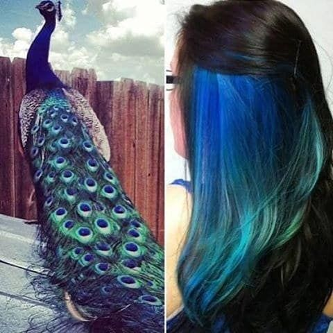 Peacock Beauty Hair Inspirations