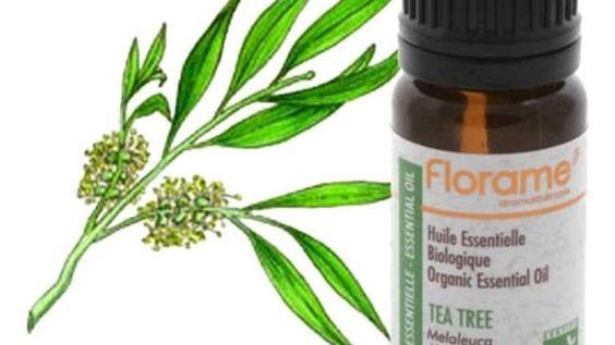 فوائد زيت شجرة الشاي للبشرة الدهنية Tea Tree Oil Skin Tea Tree Oil Oily Skin