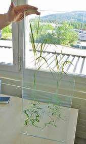 Printable decoration film for EVA glass lamination