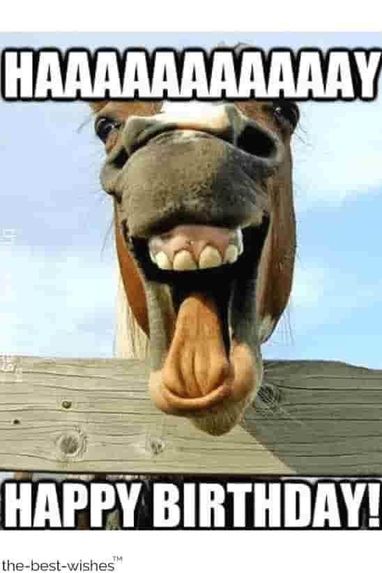 Funny Birthday Videos : funny, birthday, videos, Funny, Horse, Happy, Birthday, Memes, Meme,