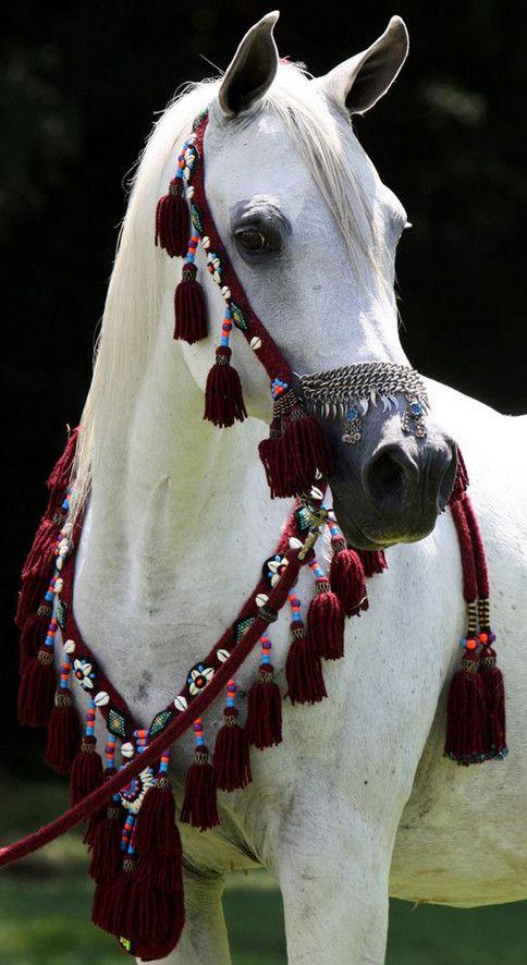 Saudi Arabia S Most Beautiful Horses Ride In The Kingdom S Famed Souq Okaz Festival Arabian Horse Beauty Beautiful Arabian Horses Most Beautiful Horses Horses